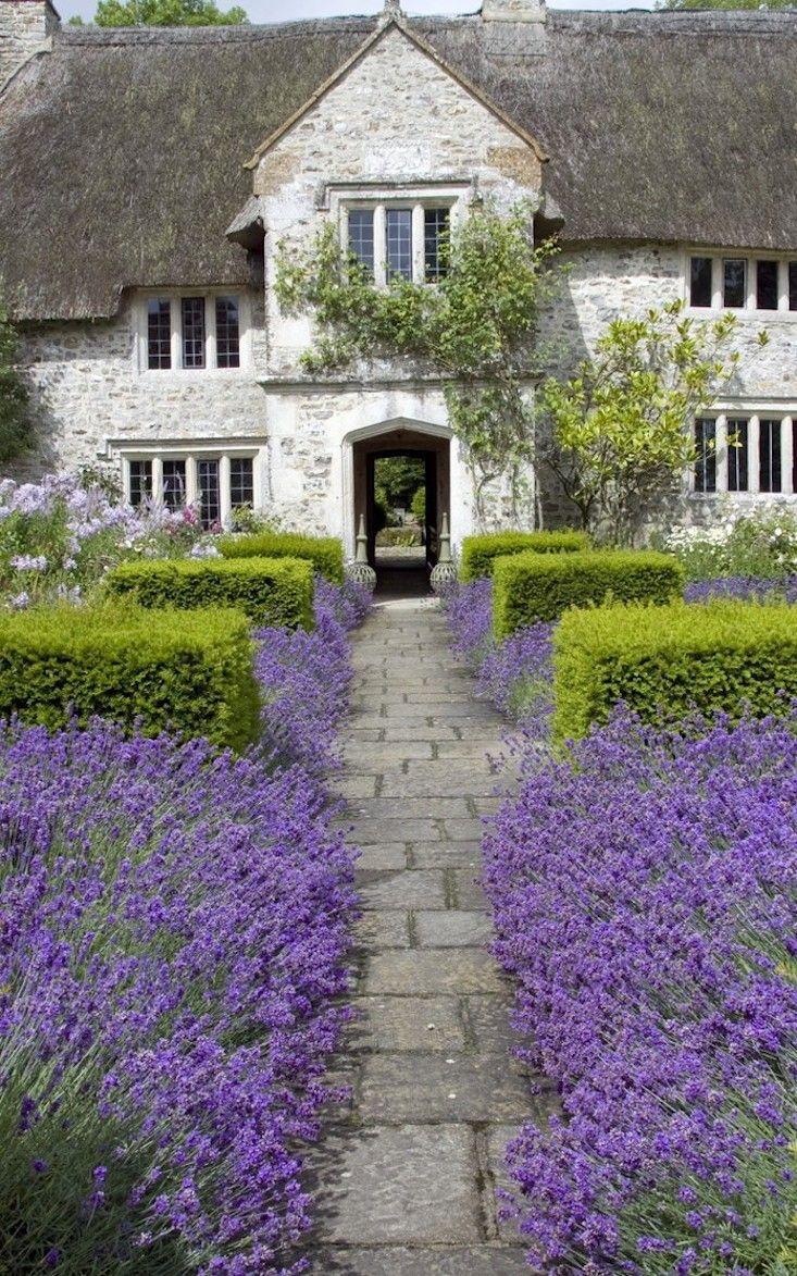 garden, lavender
